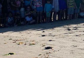 Nascimento de tartarugas marinhas reúne multidão na orla da Grande João Pessoa; veja