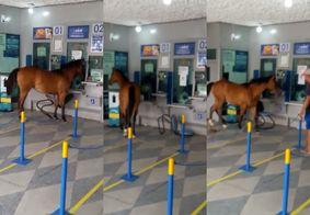 """Cavalo invade casa lotérica no interior da PB: """"Veio tirar o auxílio"""""""
