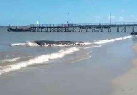 Baleia é encontrada morta em praia do litoral norte da Paraíba