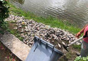 Parque da Lagoa amanheceu com vários peixes mortos