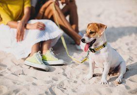 Como aproveitar o verão com os pets