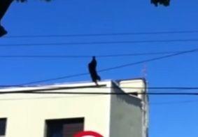 Macaco despenca de poste elétrico e é resgatado por morador antes de cair no chão; veja vídeo