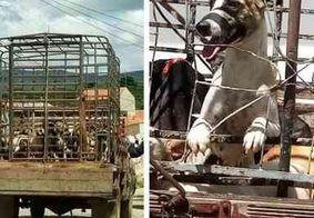 Secretário de Saúde de Igaracy é exonerado após matança de cachorros