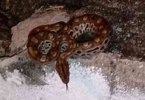 Cobra é encontrada em garagem do Samu, em João Pessoa