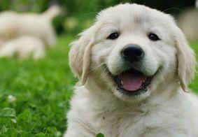 Desembargador não reconhece cachorro como autor de ação por danos morais na PB