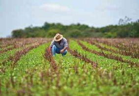 Geração de empregos na agropecuária é a que mais cresceu na Paraíba em 2018