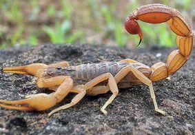 João Pessoa tem maior média de pessoas picadas por escorpiões em 6 anos
