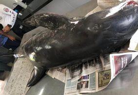 Golfinho de mais de 2 metros é encontrado morto em praia da PB