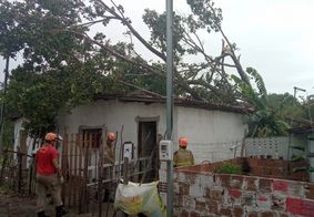 Imóvel será interditado após a remoção da árvore