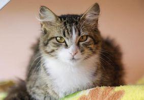 Gatos ingressaram com processo por danos morais
