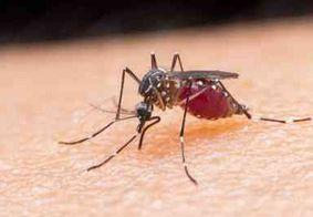 Vídeo: Infectologista explica tudo sobre a malária