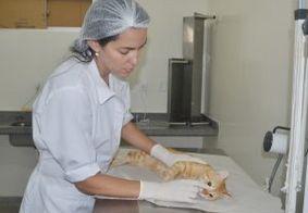 Castração de cães e gatos pode ser agendada on-line a partir desta sexta (5)