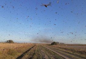 Paraguai confirma existência de nova nuvem de gafanhotos