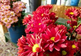 Comissão debate registros de plantas e flores ornamentais