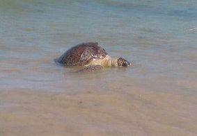 Tartarugas marinhas são achadas mortas no Litoral da Paraíba; número chega a quase 70 só em 2019