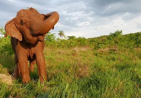 Elefanta Ramba morre em santuário no Mato Grosso