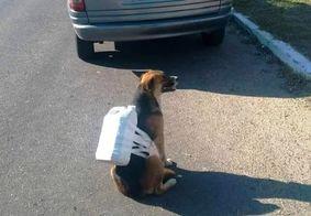 Cachorro em fila para abastecer vira assunto na internet; veja