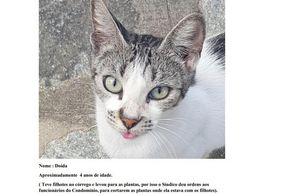 Gatos devem recorrer e pedir autoria de ação contra condomínio de JP