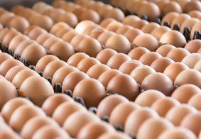 Produção e consumo de ovos de galinha bate recorde histórico no Brasil