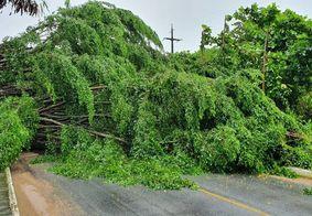 Árvore cai e bloqueia rua no bairro do Miramar, em João Pessoa