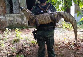 Jacaré de quase dois metros é capturado em quintal de casa em João Pessoa
