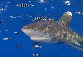 Jovem sobrevive à ataque de tubarão após pai dar socos no animal, nos EUA
