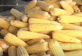 Procura por milho é tímida no Mercado Central