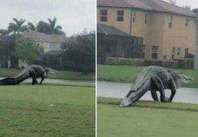 Jacaré gigante nos EUA é comparado com dinossauro