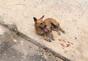 Morador arremessa cão de janela de prédio e causa revolta; veja