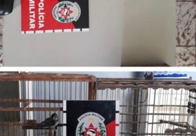 PM apreende arma de fogo e aves silvestres no interior da Paraíba