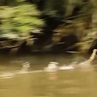 Vídeo   Lagarto Jesus corre sobre a água para escapar de predador