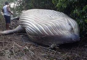 Baleia é encontrada morta em mata de praia
