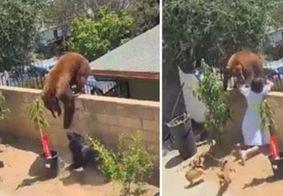 Adolescente bate em urso para defender cães e viraliza na web; veja