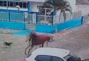 Vídeo: homem morre após cavalo desgovernado se chocar contra muro, na PB