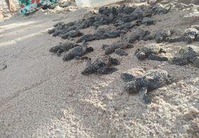 Tartarugas de espécie rara nascem na praia de Ponta de Campina, na PB