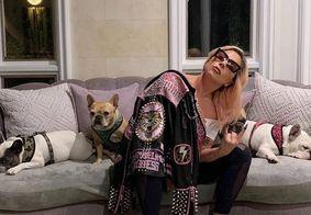 Cachorros de Lady Gaga são roubados durante passeio e cuidador é baleado