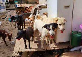 Rio de Janeiro: sem alimento por uma semana, cães devoram corpo da dona