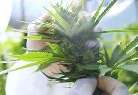 Abrace é a única instituição em toda Paraíba que tinha o direito de cultivar a planta com fins medicinais