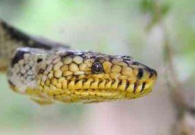 Cobra mais rara do mundo é achada 'sem querer' no interior de São Paulo